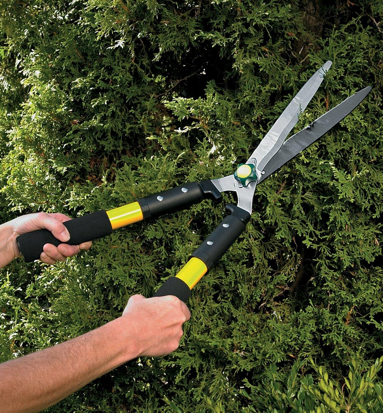 Orchid Pruning In 3 Easy Steps